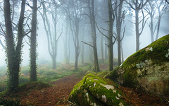 Sintra woods (J C Mills Photography) Tags: sintra portugal woods forest trees mist fog larch boulders moss ibvy green