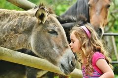 ~~ Tendresse....tout simplement !~~ (Joélisa) Tags: ninon âne donkey elisa cheval tendresse bisou juillet2017