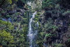 DSC_1008.jpg (David Hamments) Tags: victoria panorama erskinewaterfall lorne greatoceanroad