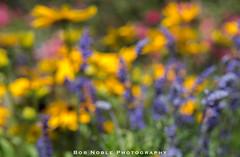 Summer Dream (Bob Noble Photography) Tags: