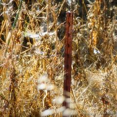 Seen Better Days (Romair) Tags: fencedfriday rustyfencepost rust corrosion cortemaderaecologicalreserve rogerjohnson
