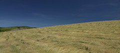 Foins d'Aubrac (Michel Seguret Thanks for 10,5 M views !!!) Tags: france aveyron aubrac été summer champ field feld foin nature michelseguret nikon d800 pro