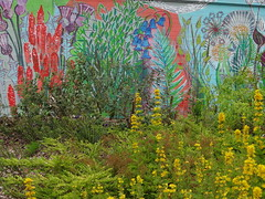 Wall Flowers (Ian Robin Jackson) Tags: wall aberdeen flowers art different sony zeiss