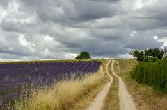 le chemin (christian.man12) Tags: chemin luberon lavandes nuages orage