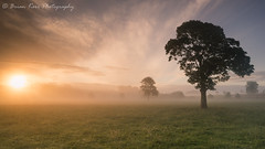 The Morning Awakens (.Brian Kerr Photography.) Tags: cumbria mistymorning photography photographer penrith trees landscapephotography sonyuk formatthitech loxia outdoor outdoorphotography nature naturallandscape briankerrphotography