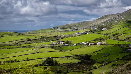 Irish meadowland
