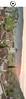 19x5cm // Réf : 12041005 // Saint-Cirq-Lapopie (Editions Jourdenuit Patrimoine) Tags: saint cirq lapopie eglise fortifiee village medieval lot france occitanie carte postale marque page français editions jourdenuit toulouse