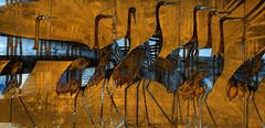 Garzas (seguicollar) Tags: imagencreativa photomanipulación art arte artecreativo artedigital virginiaseguí garzas animales pájaros aves