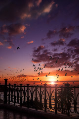 Taking flight. f8; 1/125s; ISO 100; 22mm. © Juan Manuel Sáenz de Santa María, 2017. (Brenus) Tags: impresiones lensblr photographers tumblr original landscape urban sunrise birds mediterranean balconies sea clouds