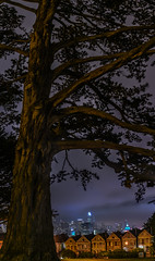 living history (pbo31) Tags: bayarea california nikon d810 color evening july 2017 summer boury pbo31 over night dark black alamosquare sanfrancisco view cityhall salesforce tower skyline city urban fog panoramic large stitched panorama tree old park purple
