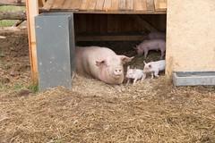 GoUrban_170727_Farm_123