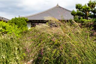 萩の寺 - 常林寺 / Jyourin-ji Temple