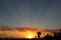 Az flag templete (Scott Douglas Worldwide) Tags: sky s sunrays smiling sun sunset perfect p peaceful paradise palmtree palm palms palmtress pretty pink pp g golden glorious godlike gold god glow great az arizona awesome america amature american adorable