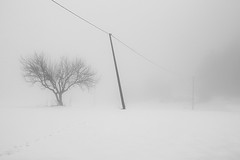 neve e nebbia (rino_savastano) Tags: neve nebbia inverno campagna albero