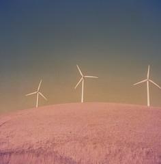 Wind Power | 1950 Mamiya Six | Olympus 75mm f/3.5 Zuiko | Seikosha Rapid | NPL Fuji T Neg | Orange Filter (bunæn) Tags: film mediumformat 6x6 mamiyasix nplfujitneg orangefilter 120film rangefinder folder foldingcamera windmill windturbine windpower altamontpassarea altamontpass altamont expiredfilm expired