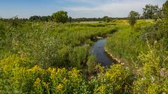 Lush (kensparksphoto) Tags: fishcreekpark alberta calgary pond green verdant lush beaver july morning