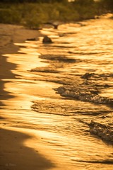 Liquid Gold . . . (Dr. Farnsworth) Tags: water lakemichigan bay bays traversecity gold splash colors sand beach pure oldmission mi michigan summer july2017