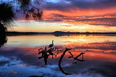 Pelican rest. (Ian Ramsay Photographics) Tags: pelican rest myalllakesnationalpark newsouthwales australia