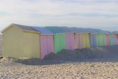 IMG_0530 (Azezjne (Az photos)) Tags: canon 75300 50 stm 600d berck sur mer bercksurmer cote côte dopale bromance plage sable bokeh zoom coucher soleil sunset beach sand eclipse dune mouette animaux animalière flou 75 300