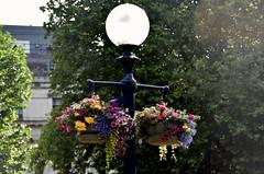 Flowers Display, Catherdral Square, Birmingham (Manoo Mistry) Tags: birmingham nikon tamron west midlands westmidlands cathedralsquare lamp lantern liight lamppost flowers flowerbasket hangingbasket blossams