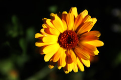 Flower (Mysti.S) Tags: yellow
