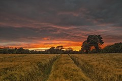 End of day's (Minibert93) Tags: sky sunset field wicklow ireland hay trees clouds colour path canon