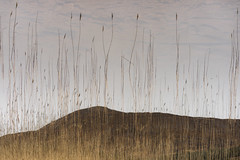 Reach (jellyfire) Tags: bendamph distagont3518 elgol february highlands landscape landscapephotography scotland sony sonya7r torridon winter ze zeissdistagont18mmf35ze leeacaster wwwleeacastercom zeiss