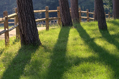 Fences, Shadows (DaveLawler) Tags: fence fences trees shadow green grass morning massachusetts newengland park howestate howe spencer hff friday