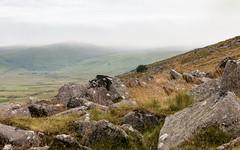 Dartmoor rocky hillside