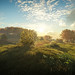 TheHunter: Call of the Wild / Morning Sun