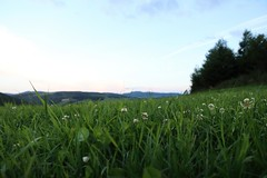 Countryside (_dankhn) Tags: countryside landscape field sauerland wiese meadow green landschaft germany deutschland hochsauerland evening dusk dämmerung summer