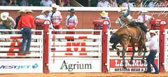 DSC02118 (♥ MissChief Photography ♥) Tags: calgarystampede2017 calgary canada horses bull cowboy bullfighters