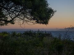 View of the Bay Bridge from Albany Bulb (jenesizzle) Tags: hiking landscape outdoors california northerncalifornia bayarea eastbay albany sunset beach coast albanyblub albanymarinestatereserve californiastatepark baybridge