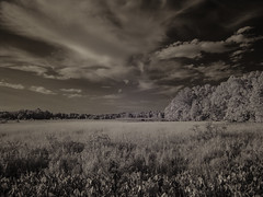 IR: Government Island 1 (dzmears) Tags: ir infrared trees water island forest pads swamp creek clouds