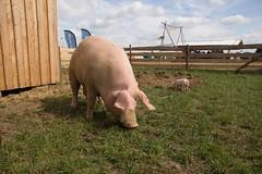 GoUrban_170727_Farm_036