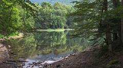 Biogradsko lake (szugic) Tags: crnagora montenegro biogradskagora biogradskojezero biogradlake lake water reflection nature landscape jungle trees forrest wood