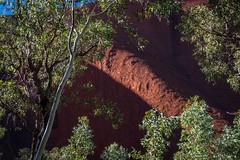 Uluru - Mutitjulu Waterhole-3