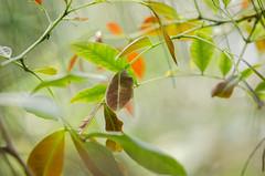 © monica silveira (© monica silveira | fotografia) Tags: folhas arlivre nikon nikkor restinga mata folhagens cores da natureza verde