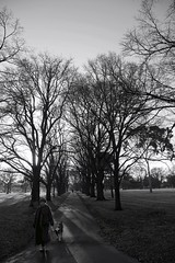 Lady wth her Dog (bobarcpics) Tags: park trees winterscene lady dog pathway winter cliftonhill innersuburbs blackandwhite