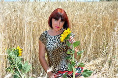 DCS_3856_00045 (dmitriy1968) Tags: portrait портрет nature природа erotic sexsual эротично beautiful girl wife люди people evening придонье девушка отдых путешествия outdoor секси пшеница wheat солнечный день sunny day