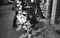Stalks (Arne Kuilman) Tags: kentmere400 iso400 chinon 3001 pointandshoot film amsterdam d76 exhausted homedeveloped nederland netherlands blackandwhite stokrozen flowers bloemen