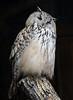 Eule (muman71) Tags: dsc8191 nikon sigma70200ex 1500sec f35 200mm iso400 d610 wildpark tripsdrill badenwürttemberg eule owl