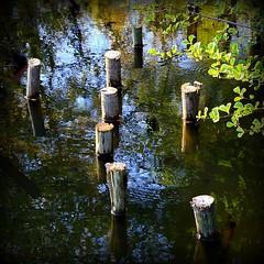 stuck in the water (mujepa) Tags: posts poteaux fishing pond étang pêche ponton pillars pontoon