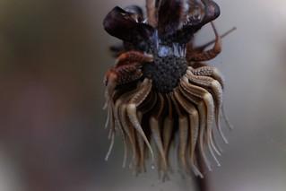 Plant (Macro) Little Alien