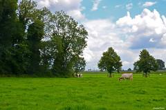 Holland Landscape (JaapCom) Tags: jaapcom landscape wezep landschaft landed natural clouds holland trees fee deer