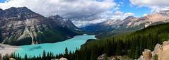 Peyto Lake Panorama (tylerhuestis) Tags: banff banffnationalpark alberta canada nationalpark nature landscape glacierlake