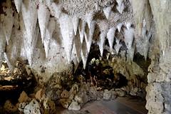 Hanging down (smcnally24601) Tags: painshill park cobham surrey england english britain british country summer