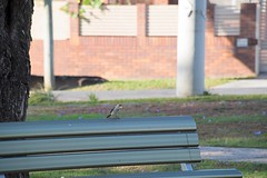 Bird on a Hot Tin Chair (mickhail93) Tags: bench bird miner nikon nature landscape city urban