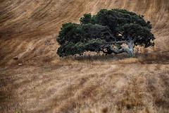 Piegata dal vento (Gianni Armano) Tags: piegata dal vento pianta terra sardegna foto gianni armano photo flickr