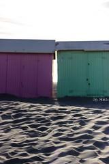 IMG_0540 (Azezjne (Az photos)) Tags: canon 75300 50 stm 600d berck sur mer bercksurmer cote côte dopale bromance plage sable bokeh zoom coucher soleil sunset beach sand eclipse dune mouette animaux animalière flou 75 300
